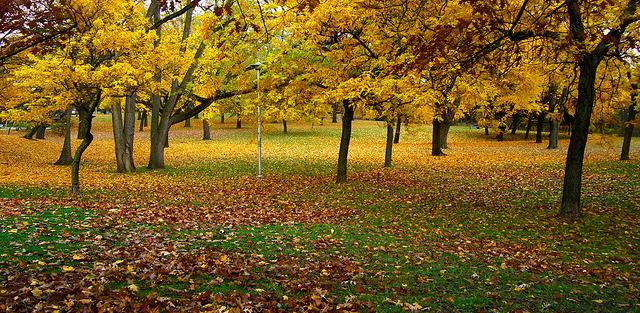 Chorley Park