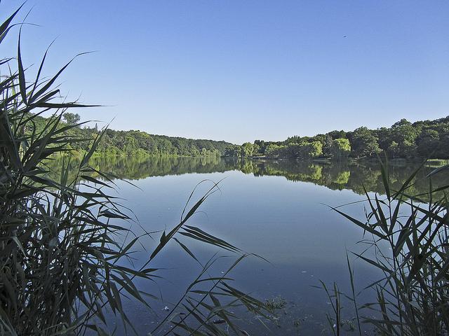 Grenadier Pond by Vianney Sam Carriere