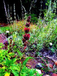 Native Flower Garden by Amelia Bellows