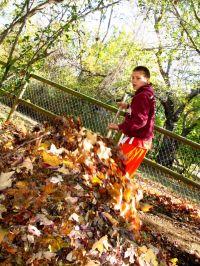 Leaf Pile by OakleyOriginals