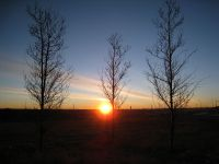 Morning Sunshine by Dawn