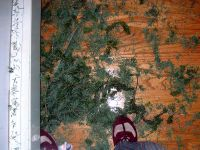 Christmas Tree Disposal by d i o d e