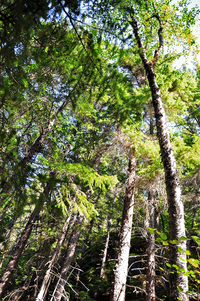 Chilkoot Trail by Kimberly Vardeman2