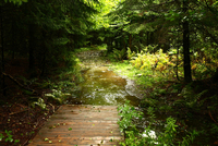Fundy Hiking Trail by Martin Cathrae