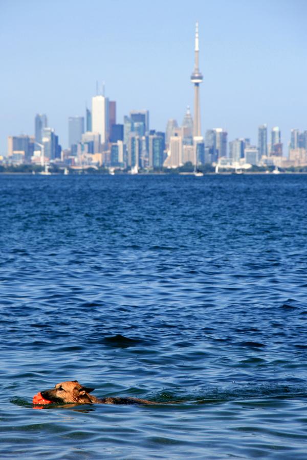 Dog swim in Ontario