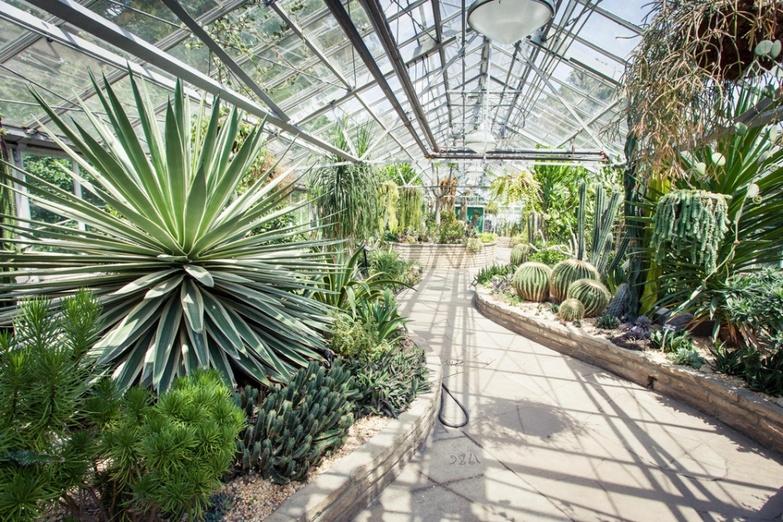 Allan gardens conservatpry cactus house