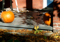 Pumpkins by Double Feature