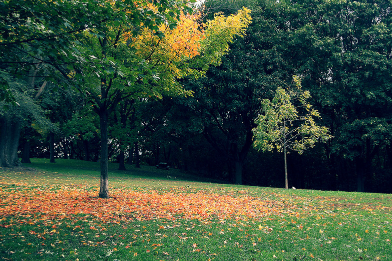 Falling leaves in park