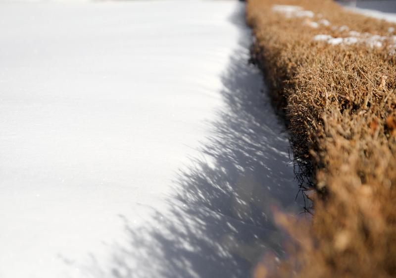 Hedge by Matt MacGillivray