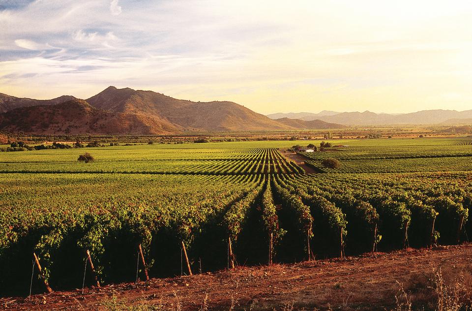 Vineyard by caliterra