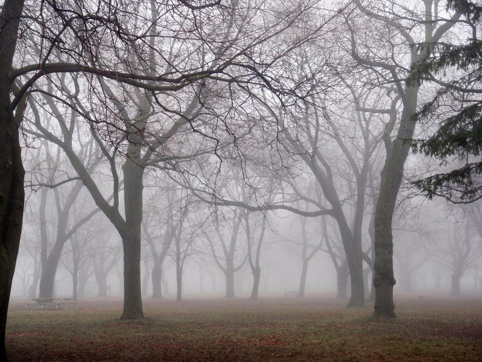 Coronation Park by Gary J Wood