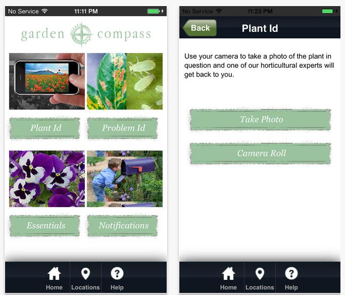 Garden Compass Plant