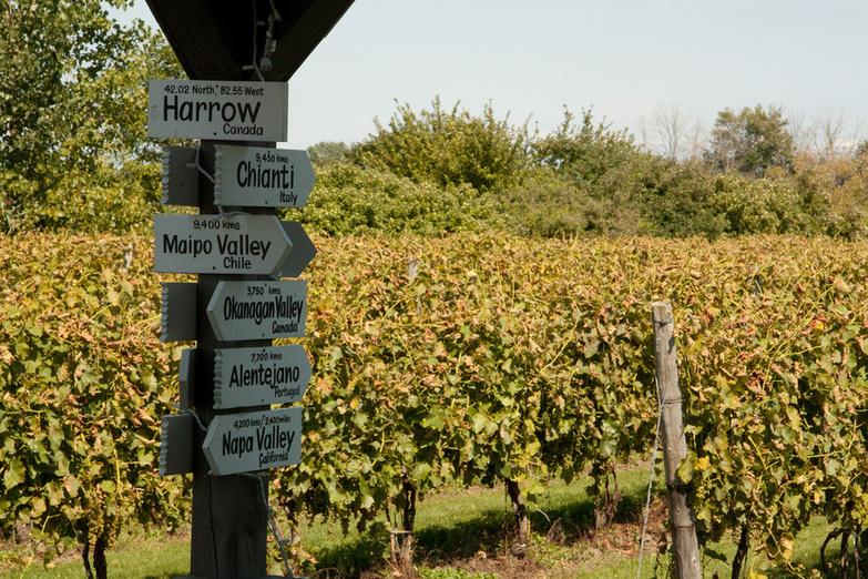 Colio Estate Wines By Sharon Drummond