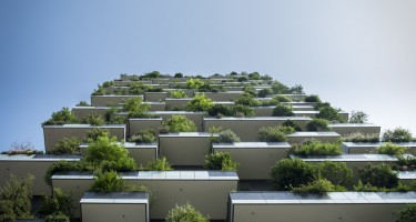 Toronto Experts: 11 Tips on Condo Gardening