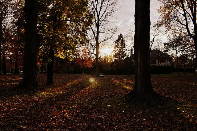Rosendale park
