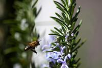 Rosemary honey by dnak