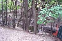 Moore Park Ravine by Lone Primate