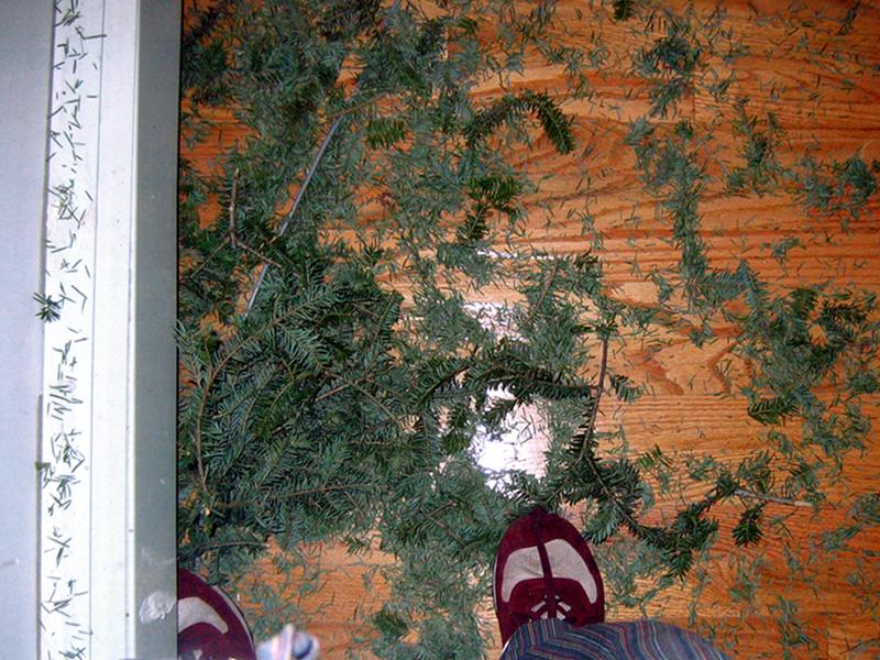 Christmas Tree Disposal Tips