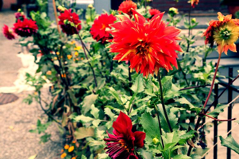 Red flowers in frontyard