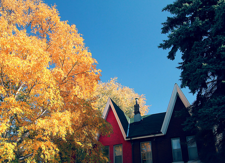 Downtown Toronto houses in autumn colours