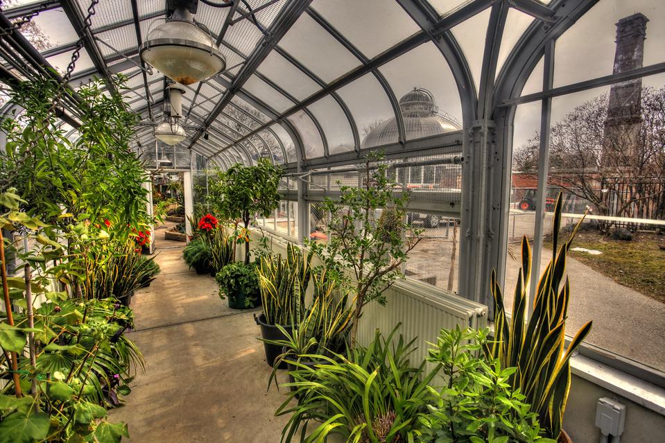 Toronto Allan Gardens Inside Looking Out