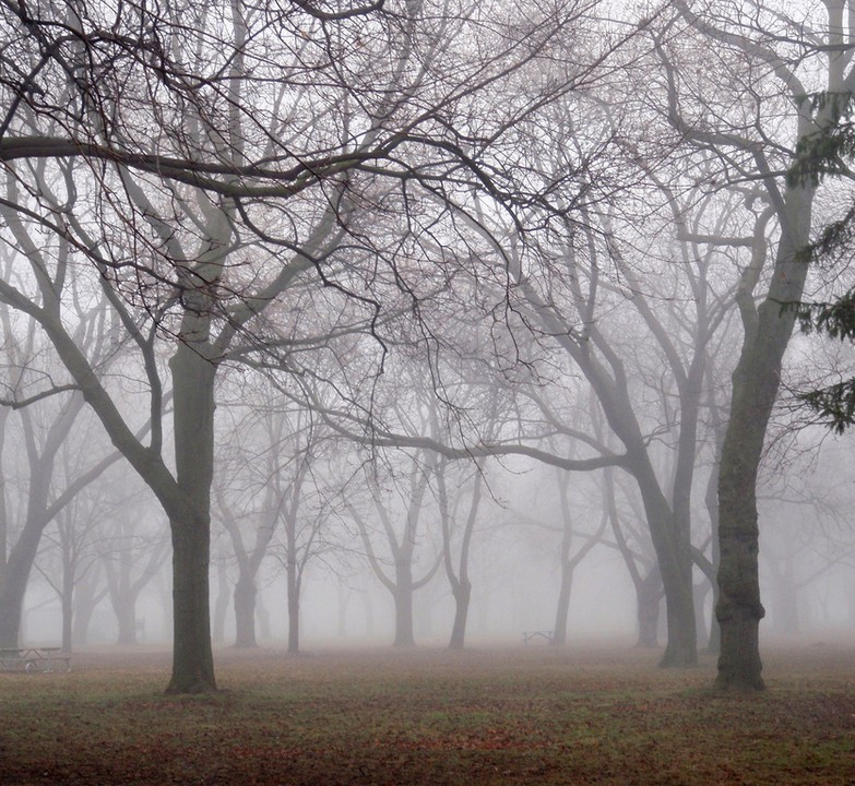 Photo of the Week – Trees in Fog