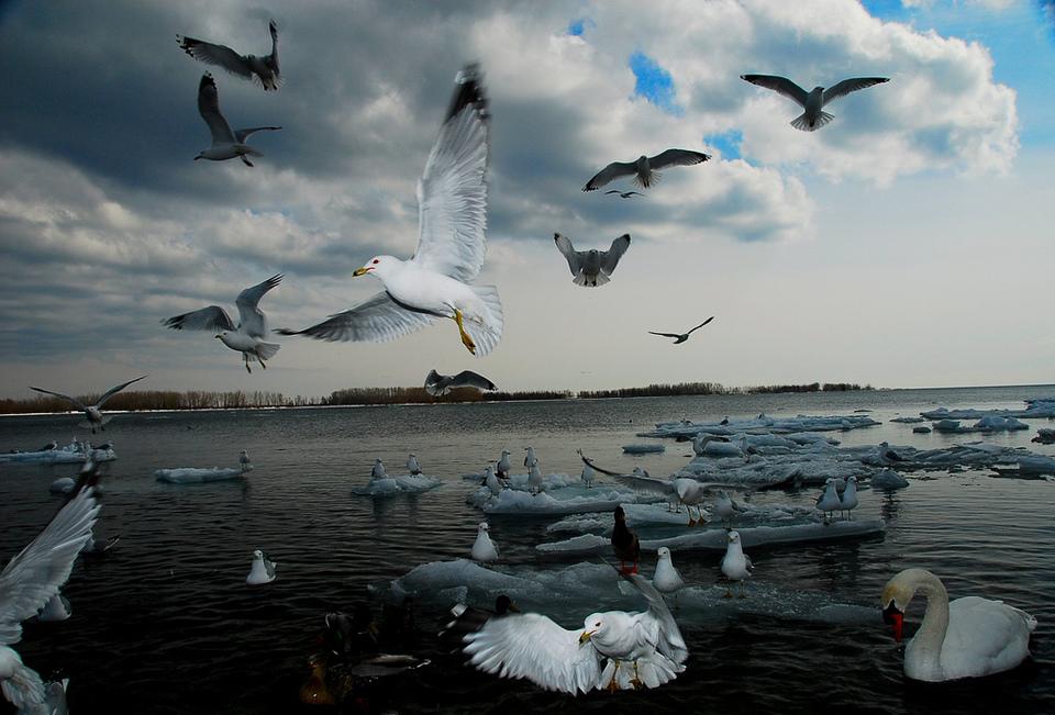 Birds by Mani Binelli