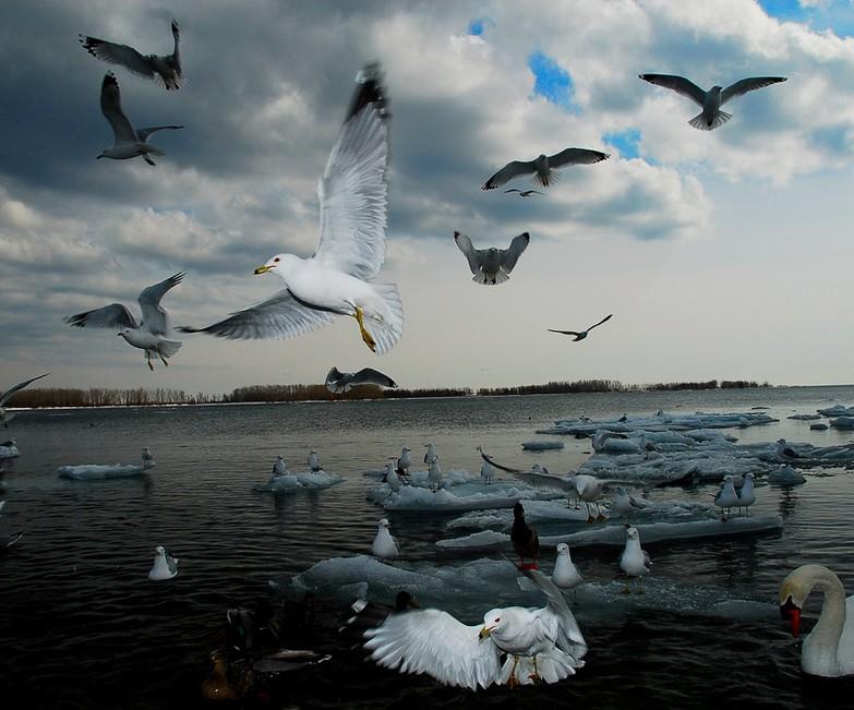 Photo of The Week – Ontario Birds