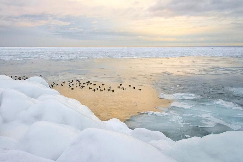 Icy Sunset With Birds In Toronto By JoSullivan59