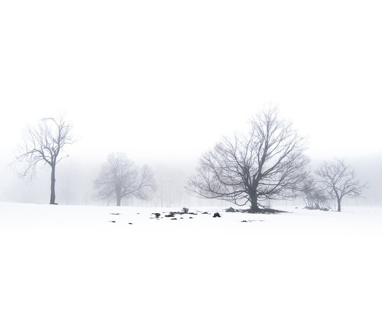 Photo of the Week: Snowy and Fog