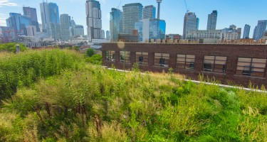 Photo Essay: The Green Roofs of Toronto